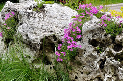 Porous boulder and flowers Stock Images