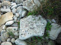 Porous Rocks on the Beach Royalty Free Stock Images