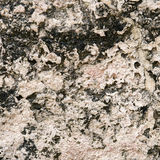 Porous sandstone Royalty Free Stock Images
