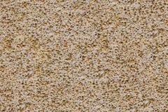 Porouse pętaczki tekstury bezszwowy tło, piana kamienny wapień Fotografia Stock