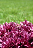 Porpora & verde fotografie stock
