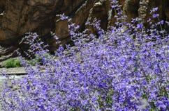 porpora del giardino di fiore Fotografie Stock Libere da Diritti