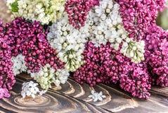 Porpora e bianco lilla su un bordo di legno Immagini Stock