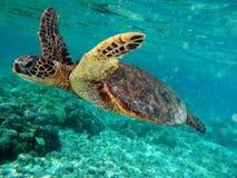 Porque eu amo o mergulho autônomo Imagens de Stock Royalty Free
