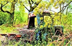 Porque nós guilhotina, assim que nós colheremos Camaleão agrícola, na fuga do arenito, Cheshire foto de stock royalty free