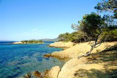 Porquerolles island. Marin pine on coast of the island of the south of France Stock Photography