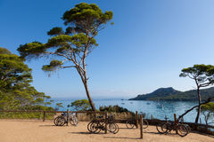 Porquerolles island in France Stock Images