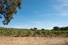 Porquerolles island, France. A beautiful vineyard on the island. Porquerolles island, in the south of France. A beautiful vineyard on the island stock images