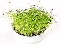 Porree microgreen in der weißen Porzellanschüssel Stockfotografie