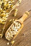 Porridge oats Stock Photos