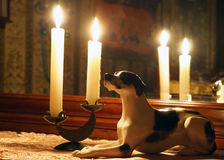Porseleinhond in het binnenland met kaarsen Royalty-vrije Stock Afbeeldingen