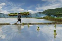 porslinfältet har I-bildjuli min yangshou för arbetaren för bildportföljrice liknande tagna Arkivbild