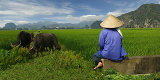 porslinfältet har I-bildjuli min yangshou för arbetaren för bildportföljrice liknande tagna Fotografering för Bildbyråer