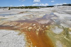 Porslinhandfat, Yellowstone nationalpark, USA arkivbild