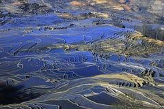 porslinhaniterrass yunnan Royaltyfria Foton