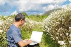 Portátil do uso do homem no campo do crisântemo Foto de Stock Royalty Free