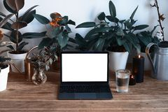 Portátil moderno pessoal na tabela de madeira com as plantas verdes bonitas, interior do hygge, espaço vazio para a disposição de imagens de stock