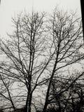 Portée d'arbre Photographie stock