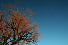 Portée pour le ciel photographie stock