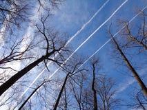 Portée squelettique d'arbres pour des contrails de jet Photo libre de droits