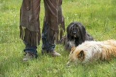 Portées gerçures et portés chiens images stock