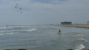 Port Aransas, TX - 28 FEB 2017: Girl has fun riding waves into shore as pelicans fly over. Port Aransas, TX - 28 FEB 2017: Girl has fun riding waves into shore stock video