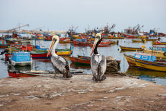 Port of Arica Royalty Free Stock Image