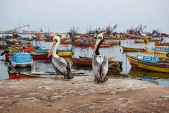 Port av Arica Royaltyfri Bild
