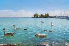 Port av Balatonfured och sjön Balaton med svanar, Ungern royaltyfri fotografi