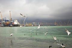 Port av Novorossiysk Fotografering för Bildbyråer