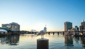 Port chéri à Sydney Photos stock
