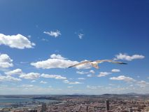 Port and city in Spain, bird flying royalty free stock photos
