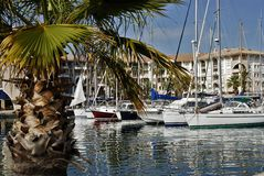 Port de Frejus and tree palm. Port of Frejus and tree palm in the foreground Royalty Free Stock Photo