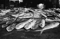 Port de pêche de Chen-kung Image libre de droits