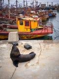 Port de pêche et otaries, ville de Mar del Plata, Argentine photo libre de droits