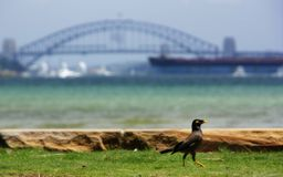 Port de Sydney Image stock