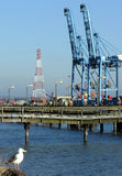 Port de Tacoma Photos libres de droits