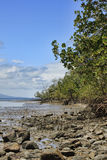 Port Douglas mangroves 8532 Royalty Free Stock Photography
