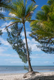 Port Douglas royalty free stock photo