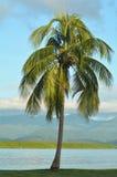 Port Douglas Queensland  Australia Royalty Free Stock Image