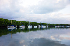Port Douglas river landscape Royalty Free Stock Photography