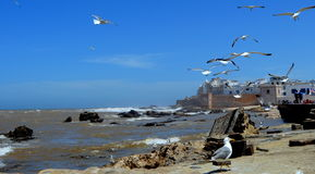Port of Essaouira, Morocco Stock Photography