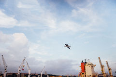 Port and flying seagulls in the sky. Beautiful peaceful view Istanbul, Turkey Stock Photo