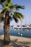 port frejus Fotografia Stock