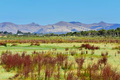 Port Hills come visto da Travis Wetland Nature Heritage Park in Nuova Zelanda Fotografie Stock