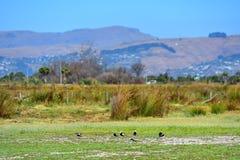 Port Hills como visto de Travis Wetland Nature Heritage Park em Nova Zelândia imagem de stock