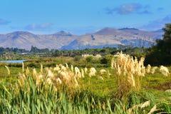 Port Hills como visto de Travis Wetland Nature Heritage Park em Nova Zelândia fotos de stock royalty free