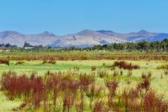Port Hills, wie von Travis Wetland Nature Heritage Park in Neuseeland gesehen Stockfotos