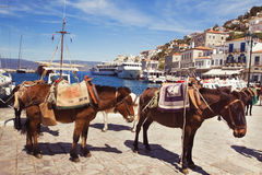 Port of Hydra, Greece Royalty Free Stock Photo