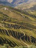 Port la valle del vino Immagine Stock
